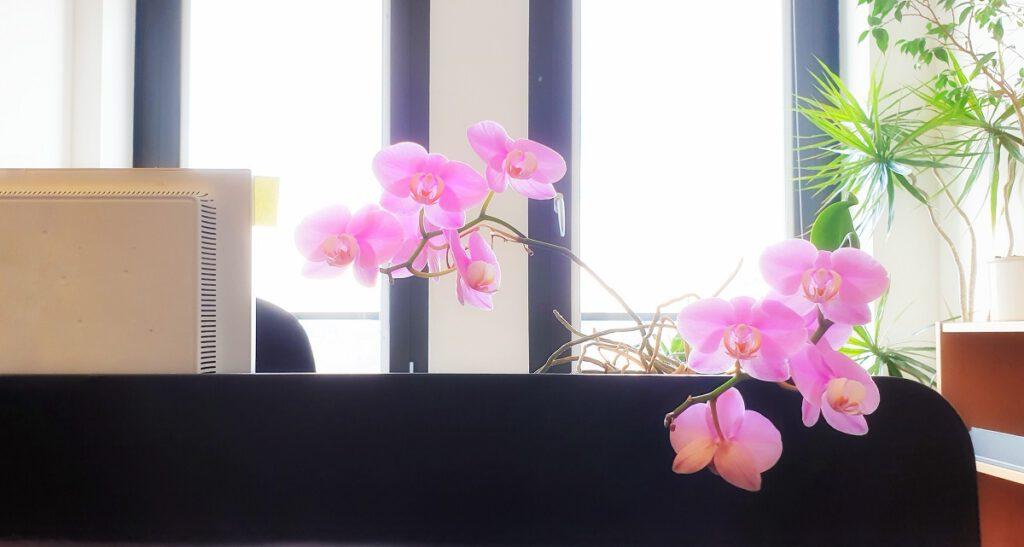 Buero Pflanzen Pflege Berlin, Glückliche Pflanzen – zufriedene Kollegen! Kompetenter und zuverlässiger Pflanzen-Service: Gießen, Düngen, Beratung bei Neuanschaffung, Bürokräuter, blühende Topfpflanzen für den Tresen oder Geburtstage, Büropflanzen, Pflanzenpflege, fachgerechte Pflege-Service von Pflanzanlagen, Nachhaltig, Gießen, Schneiden, Ausputzen, Nährstoffversorgung, Düngen, Giessservice, Gießservice